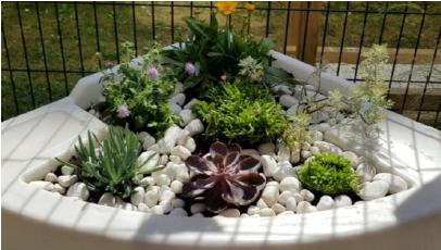 Réhabilitation d'un jardin thérapeutique.